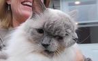 Chú mèo hai mặt Frankenlouie nổi tiếng thế giới đã qua đời