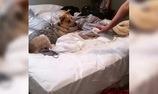 Cún bị cuồng mùi xịt phòng