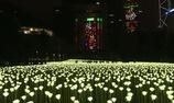25000 đoá hồng ánh sáng làm rực rỡ cả một khu vực Hồng Công nhân lễ Valentine