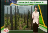 Bản tin thời tiết nông vụ - 28/02/2015