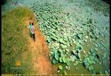 S - Việt Nam: Bức tranh thiên nhiên tại Thốt Nốt