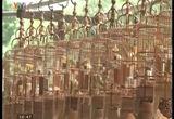 Cổng làng tự truyện:Lồng chim làng Vác
