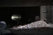 Câu chuyện về hai chú chó Poodle che chở nhau sống sót dưới cống ngầm