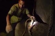 Ấn Độ: Cảm động chú voi khóc khi được trả tự do