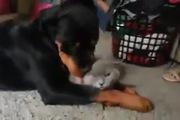 Khi cún và mèo... yêu nhau
