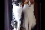 """Mèo lười: """"Nhìn mặt như có đang quan tâm không"""""""