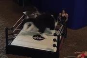 Khi mèo con chơi đấu vật cùng nhau