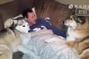 """2 chú cún """"tị nạnh"""" với nhau để được nựng"""
