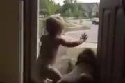Bé và cún lắc mông mừng rỡ chào đón bố đi làm về