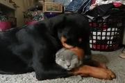 Chú mèo chịu đựng nhất năm đây rồi