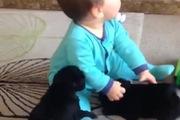 """Em bé bị 2 chú cún con """"tấn công"""""""