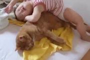 Bé mèo chịu đựng nhất năm là đây