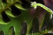 """Phát hiện cách bắt mối """"nhanh như chớp"""" của sâu bướm Hawaii"""