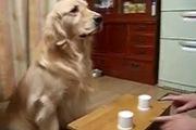 Coco chơi đùa cùng chủ nhân