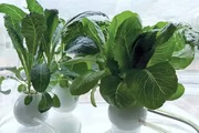 """Cloud Farms: """"Vườn rau trên mây"""" tiết kiệm không gian hoàn hảo"""