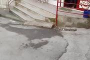 Cún Pit Bull phát cuồng vì bong bóng xà phòng