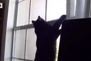 Đừng bao giờ làm việc bên cạnh mèo