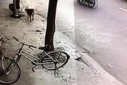 Chủ nhà bất lực nhìn cẩu tặc dùng súng điện bắt trộm chó