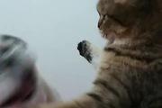 Trận chiến không khoan nhượng của mèo và cún