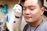 Chú mèo biết nựng chủ theo lệnh cực yêu