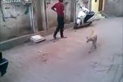 Chú chó bị hành hạ đến phát hoảng gây phẫn nộ mạnh mẽ