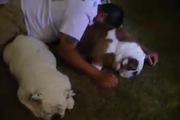 Những chú chó vô cảm nhất thế giới...