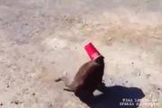 Cún giúp mèo thoát khỏi chiếc cốc quái ác