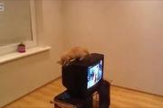 Những chú mèo hậu đậu nhất quả đất