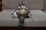Tư thế ngủ ngả ngớn của mèo Maru
