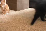 Mèo lười có thể chơi cả ngày với những thứ đồ thế này...