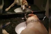 Cún gì mà tự mở vòi uống nước như người vậy...