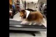 Khi cún đi tập Gym...
