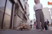 Cụ ông có thú vui dẫn rùa khổng lồ đi dạo phố hằng ngày