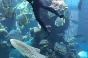 """Phì cười với phản ứng của cá mập khi bị """"cù lét"""""""