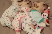 Khoảnh khắc gia đình cún ngáy ngủ cực yêu