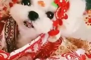 Võ Tắc Thiên phiên bản cún cực yêu