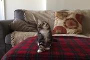 """Khi mèo con phiêu theo bản nhạc """"Uptown Funk"""""""