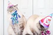 """Cặp đôi mèo """"nổi như cồn"""" nhờ khả năng tạo dáng chuyên nghiệp"""