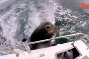"""Chú hải cẩu """"tâm hồn ăn uống"""" nhất quyết bám chặt vào đuôi thuyền để xin ăn"""