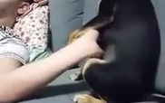 """Chú cún này đúng là """"được thể làm tới"""""""