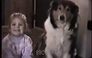 """Chú cún này cũng biết """"cười nhe răng"""" khi chụp ảnh cơ đấy"""