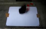 Cô họa sĩ dùng bóng rổ vẽ tranh