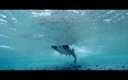 Những thước phim đẹp mắt bên dưới con sóng