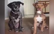 Cún và gã bạn thân