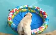 Chú cún rất biết cách hưởng thụ cuộc sống