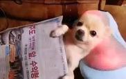 Cún con thích thú trên máy massage