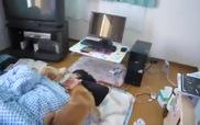 Cách cún Shiba Inu đánh thức chủ mỗi sáng