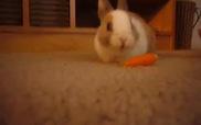 Chỉ là thỏ con ăn cà rốt thôi mà...