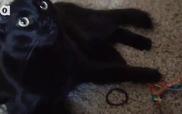 Cách mà mèo ngốc nhìn thế giới
