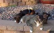 Chú mèo béo ú chịu đựng giỏi nhất năm